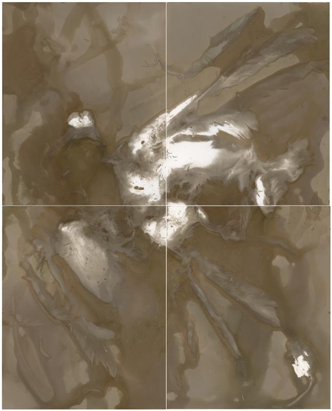 LumeNOBS&DISCcrowILFG1x404111515compx4a-(1)ss