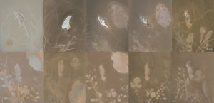 LumenMouse.collage1ss.jpg